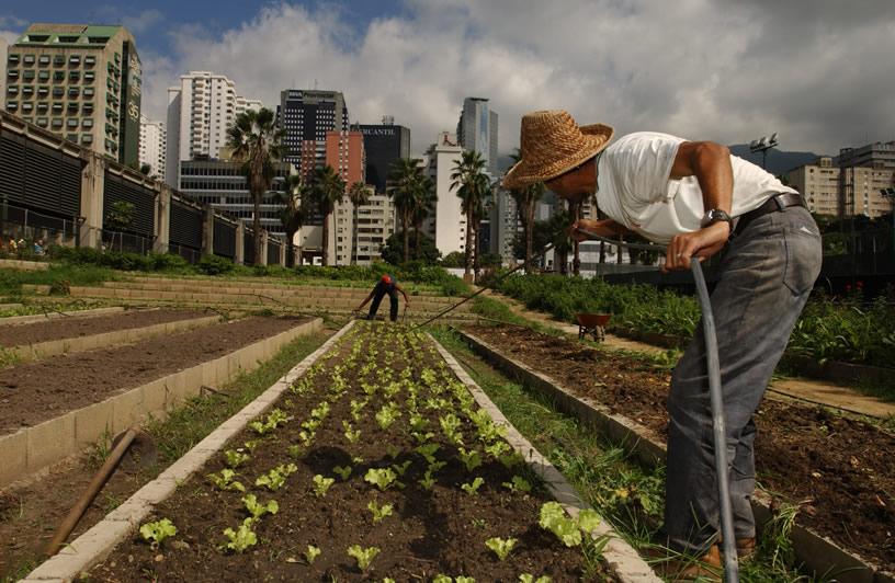 Agricultura interior 2
