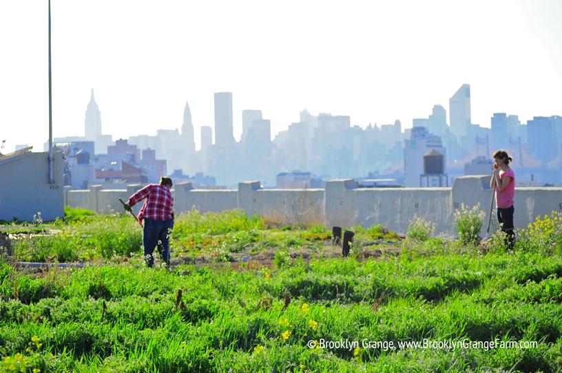 Agricultura passador 1