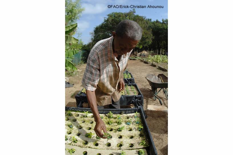 Agricultura passador 5