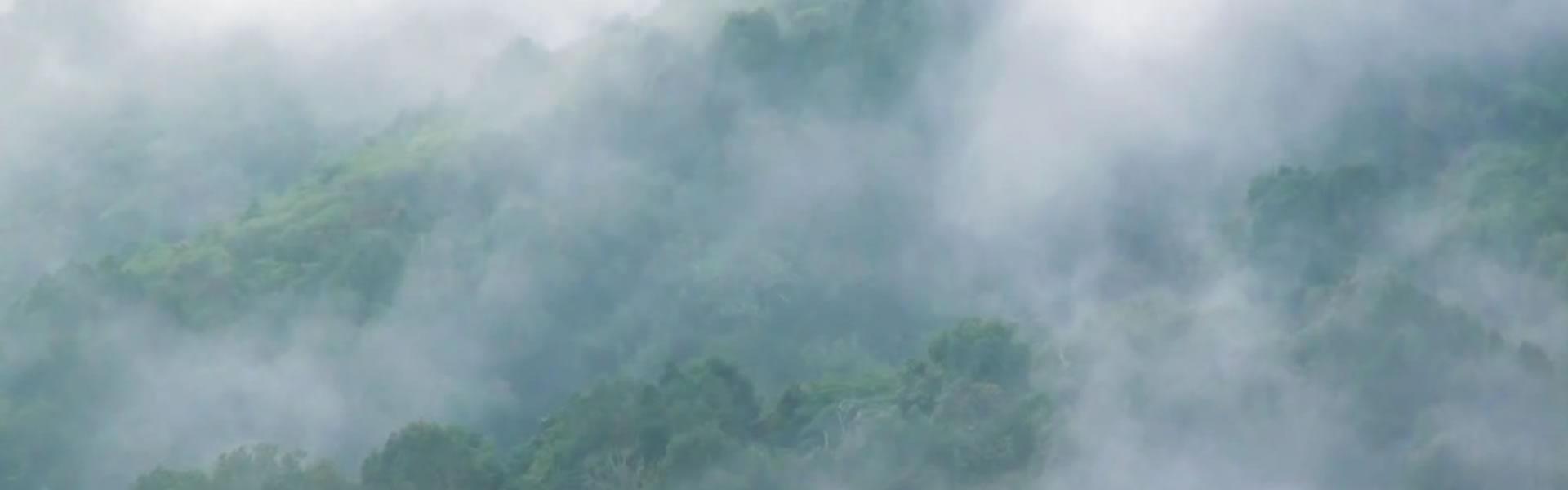 Bosques portada