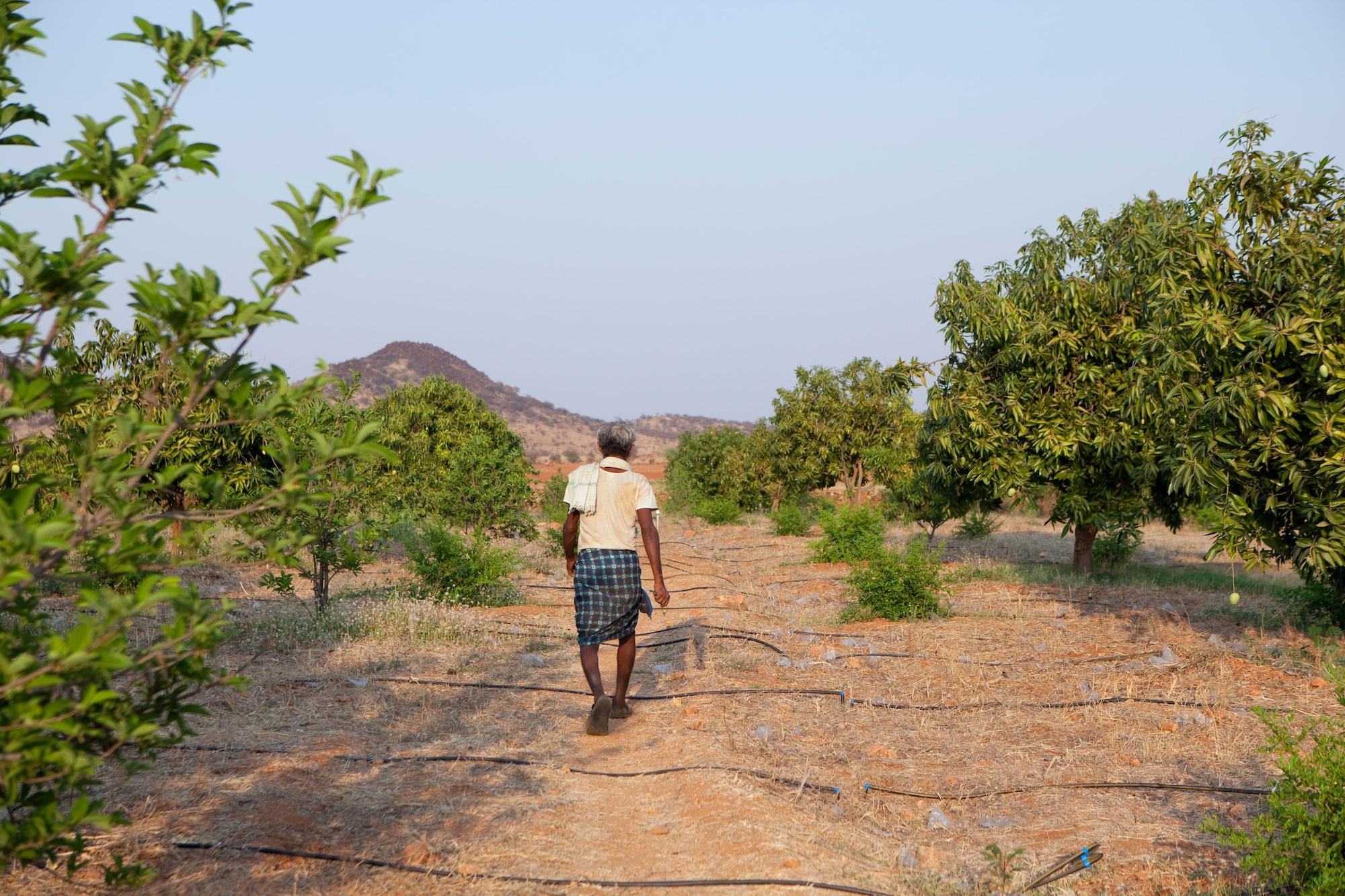 hombre horticultura