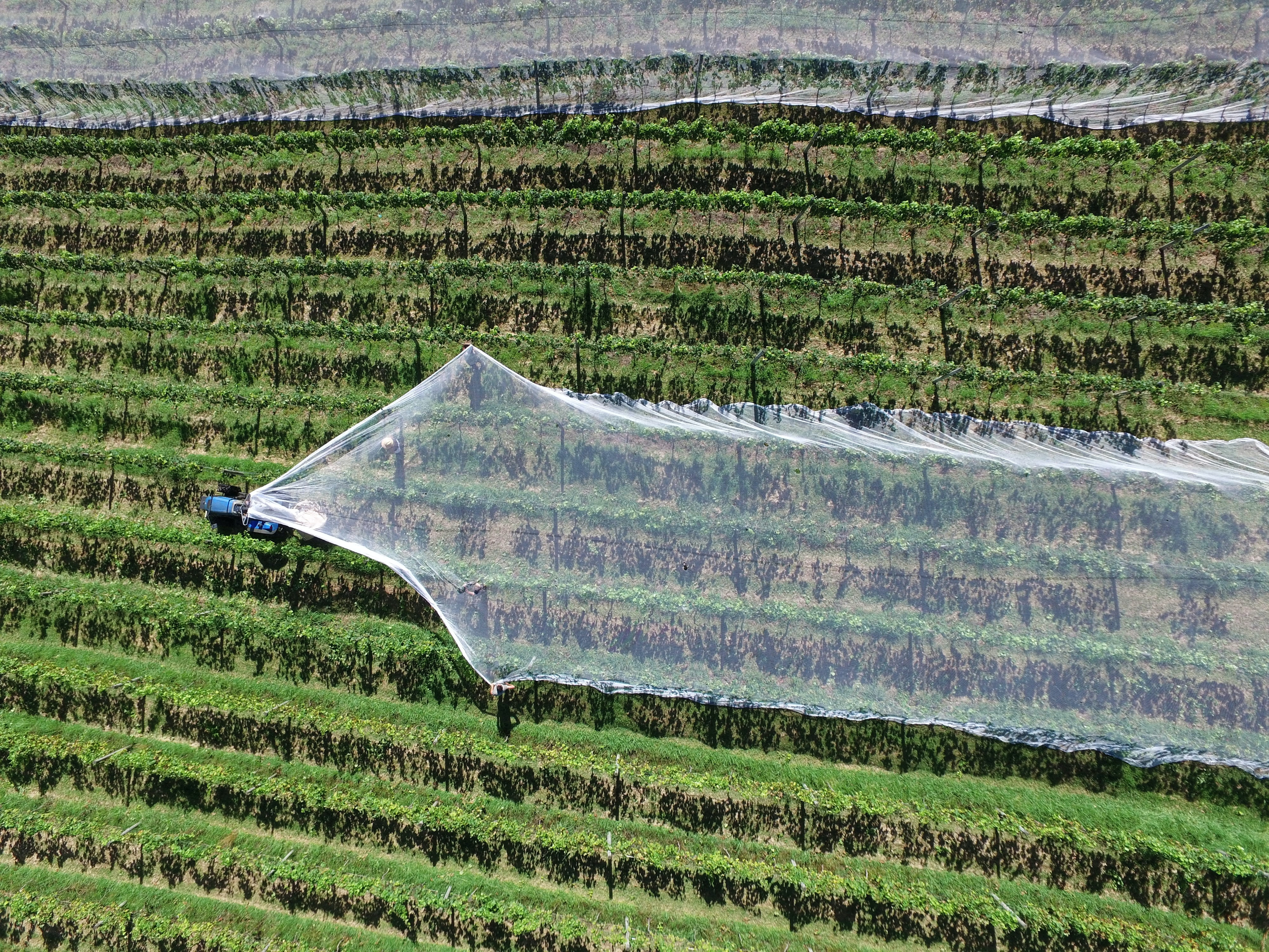 plastic fields