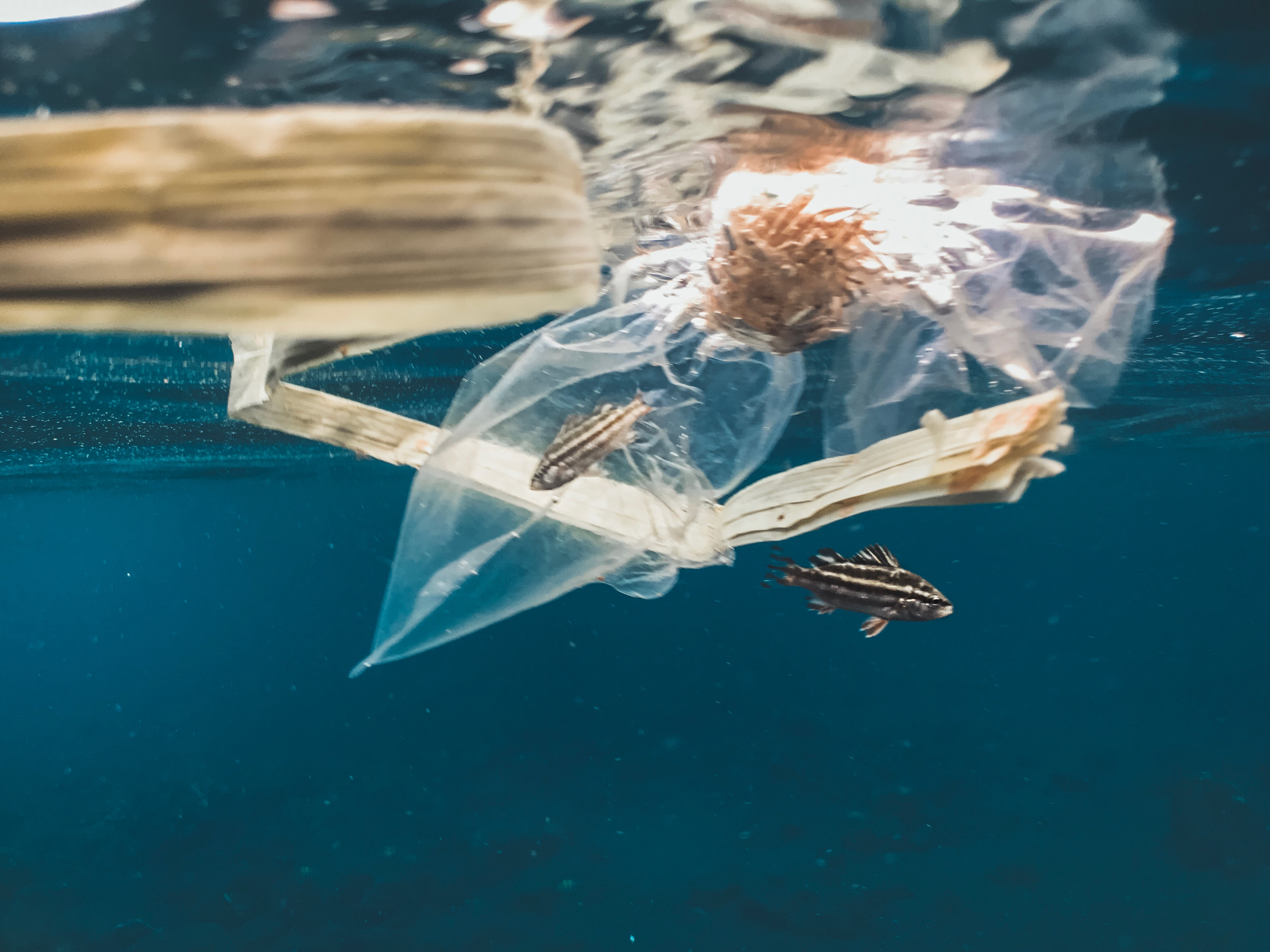 plastic bags fishes