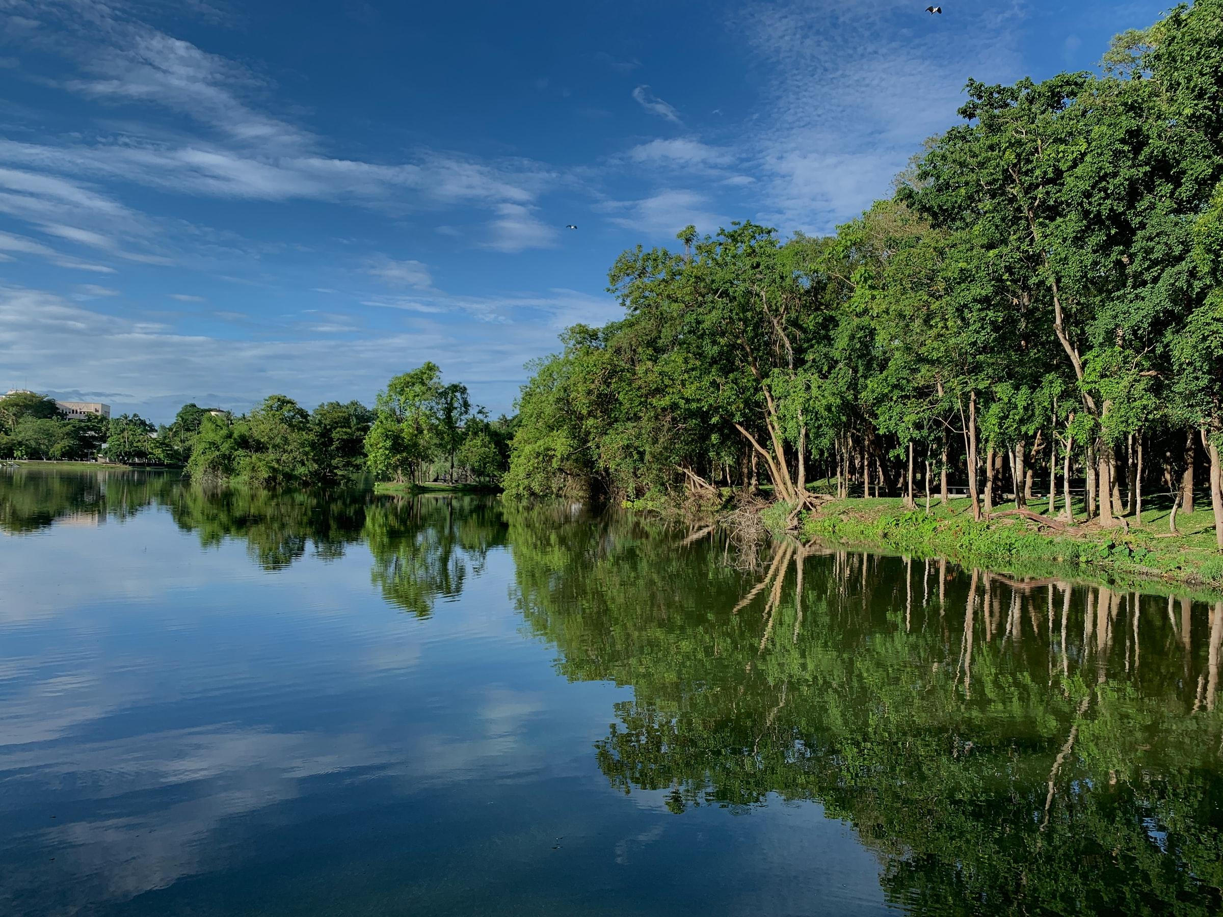 paisaje río y árboles