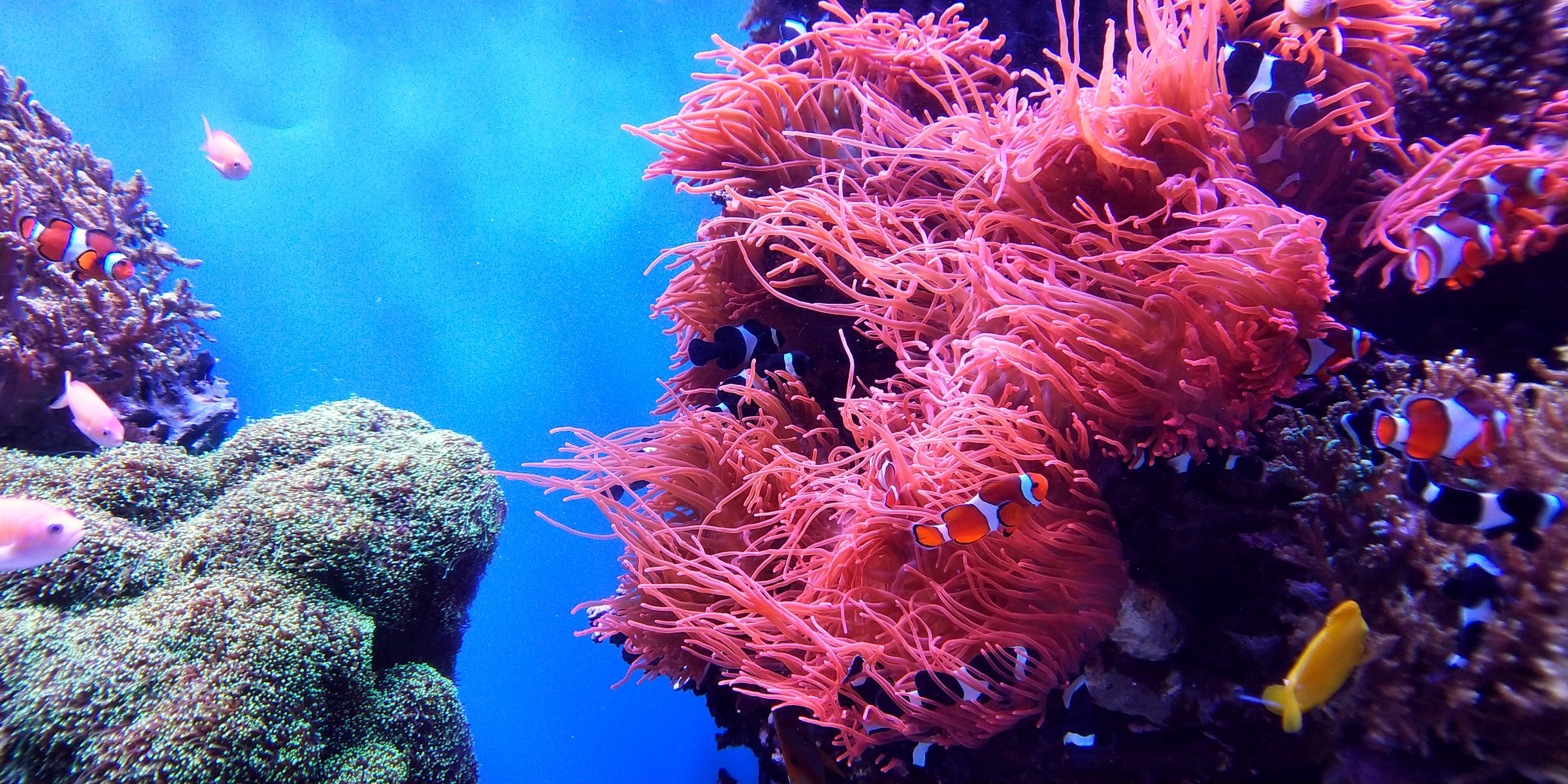 coral reefs degradated
