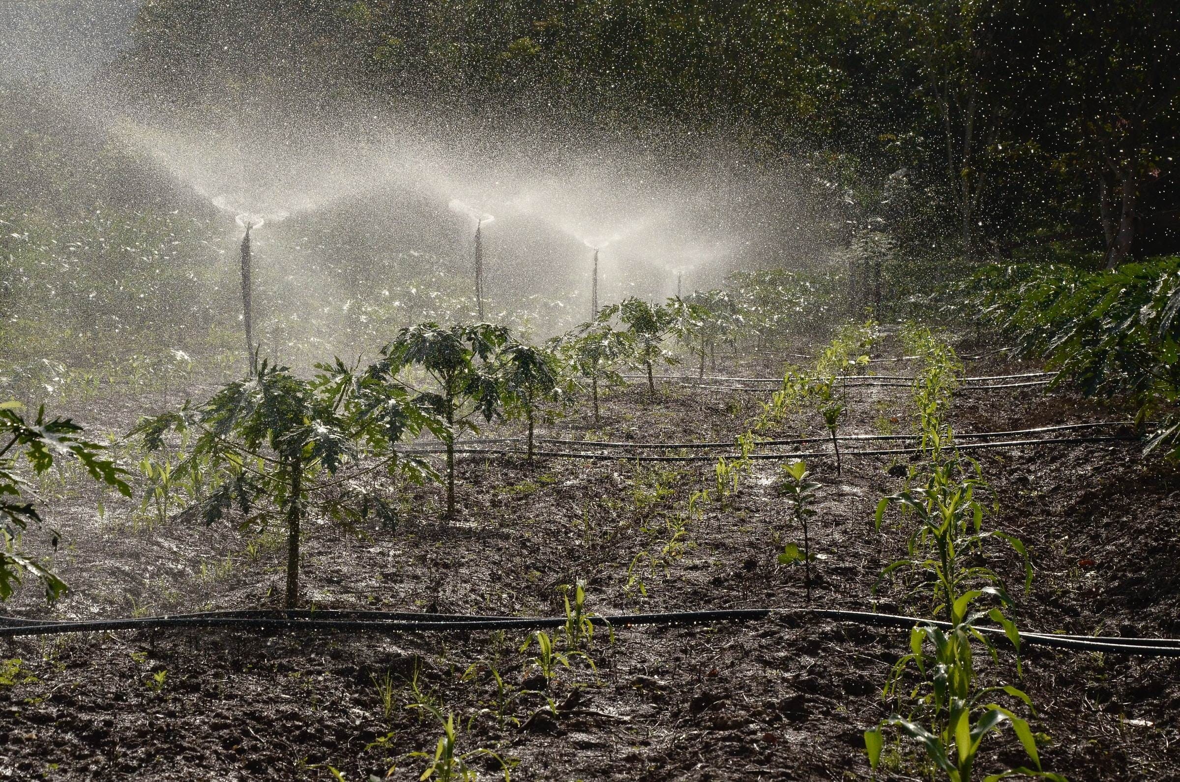 irrigated system