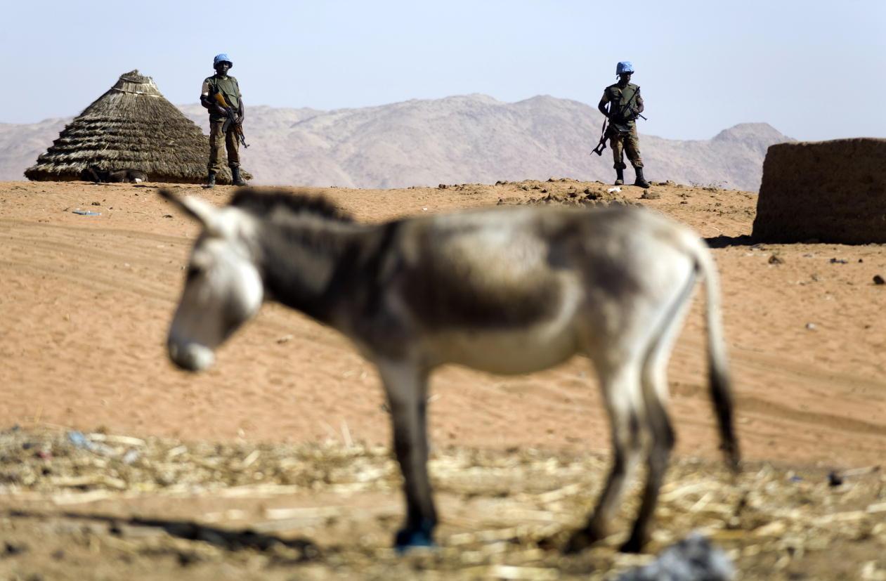 Sudan donkey