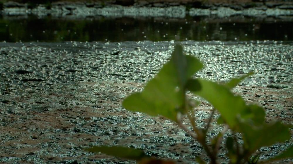 Tanjaro river polluted