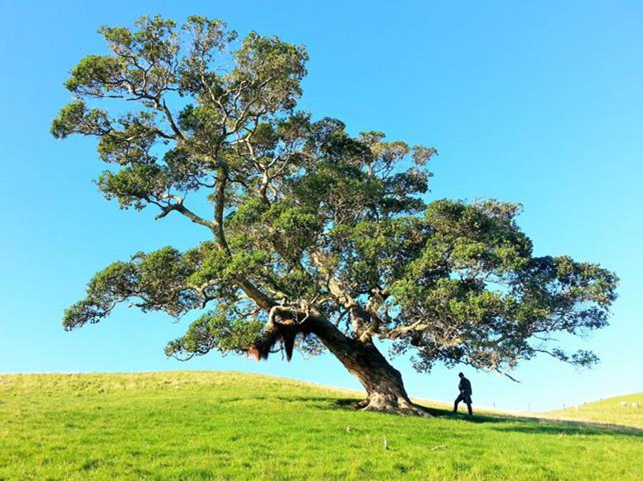 hombre bajo un árbol