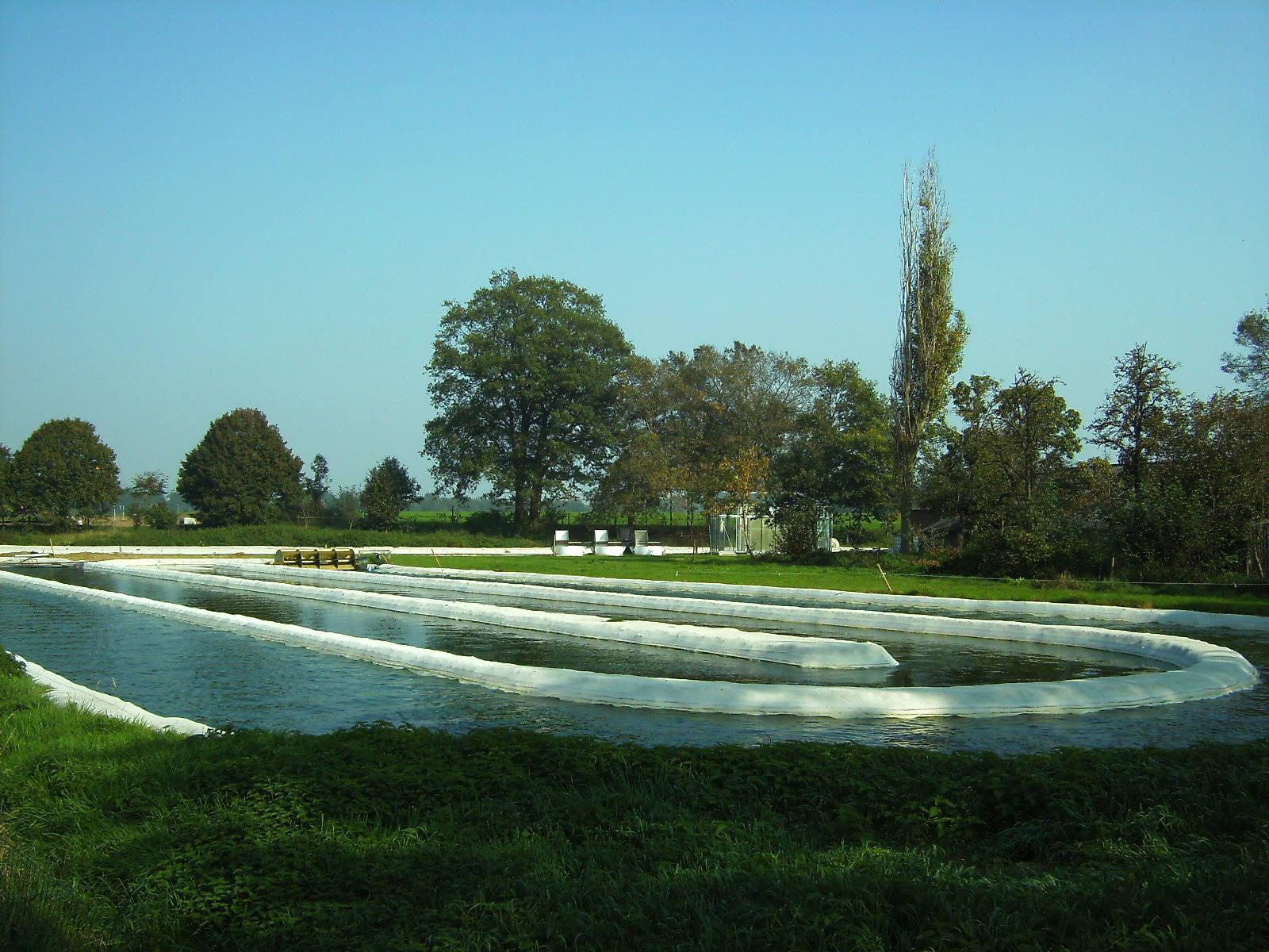 Estanque cultivo microalgas