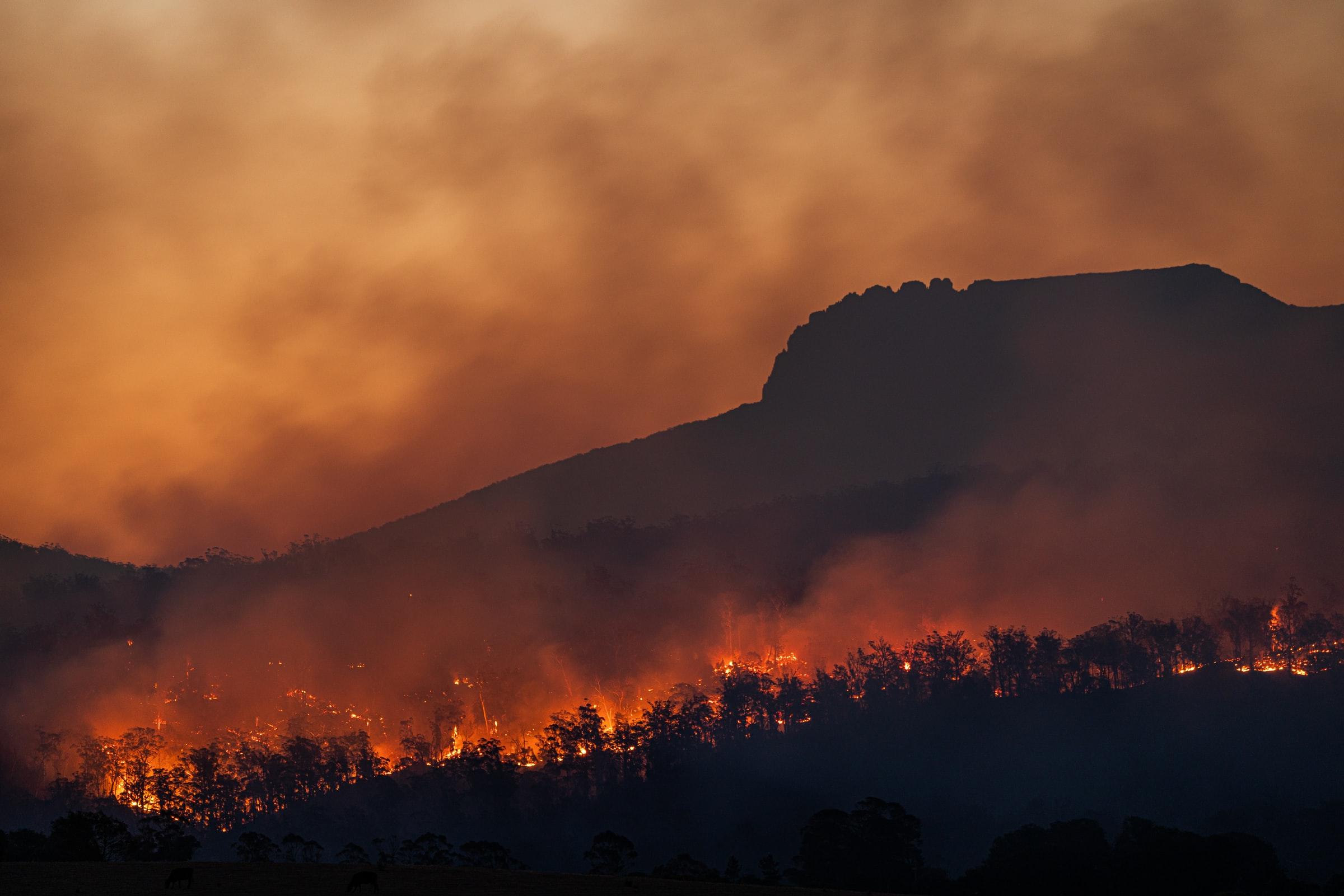 bosque quemando