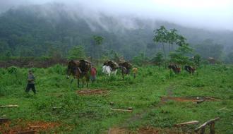 Recuperar el ciclo del agua en Bosawas, Nicaragua