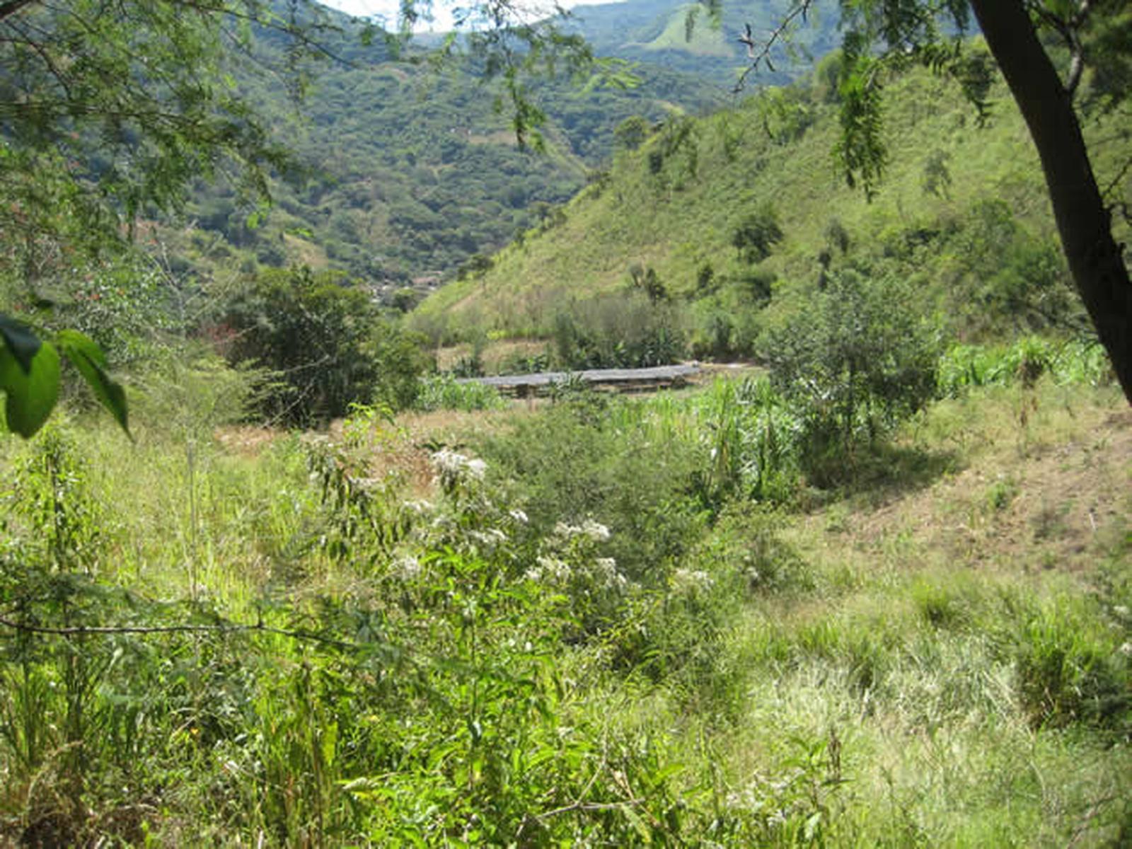Campo de cultivo agroecológico de la zona