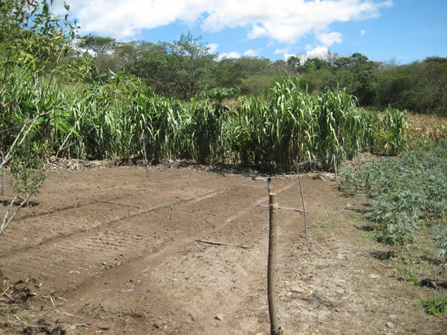 Irrigation infrastructure and agroecological training in - Riego por aspersion ...